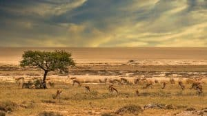 African Wildlife photography tour