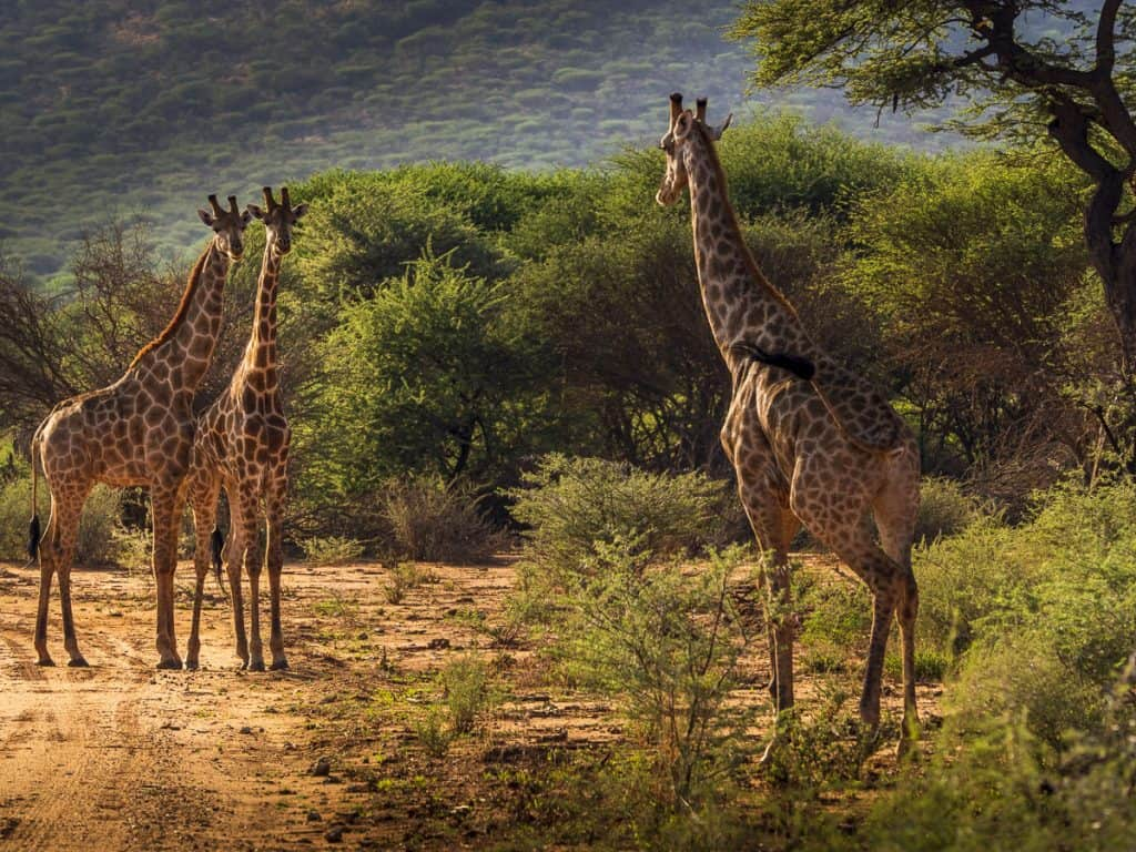 African Photography Adventure