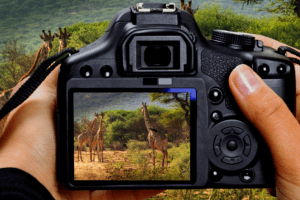what makes a good wildlife camera